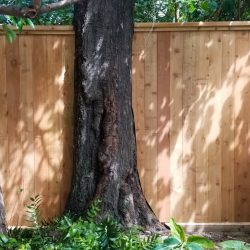 Best Fence-Gallery-25
