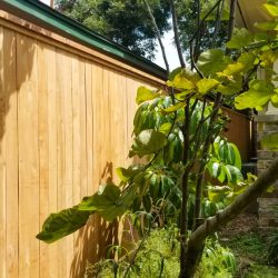 Best Fence-Gallery-26